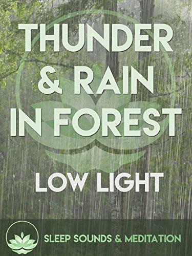 Thunder & Rain in Forest