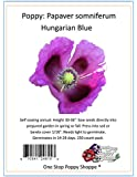 250 Poppy Flower Seeds. Papaver somniferum. Blue Hungarian Poppies by One Stop Poppy Shoppe.