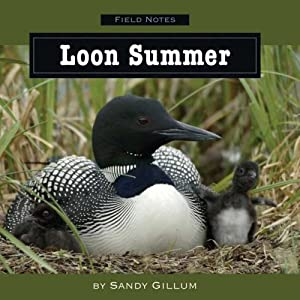 Downloads Loon Summer