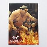 BBM2016大相撲カード「彩」■レギュラーカード■No.60/豪栄道豪太郎/闘う男たち