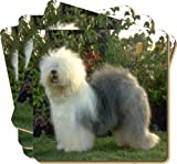 4x Old English Sheepdog Picture Coasters Gift Set, Ref:AD-OES1C
