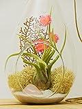 "Bliss Gardens Air Plant Terrarium with Rose Quartz 7"" Teardrop Glass / Pretty Pink Countryside"