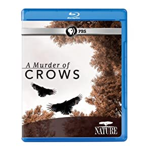 Nature: A Murder of Crows [Blu-ray]