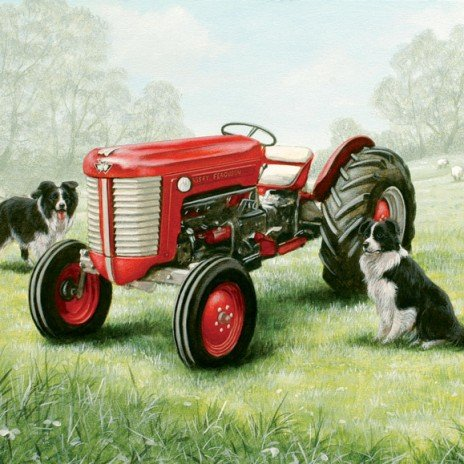 Massey Ferguson Tractor & Border Collie's Blank Greeting Card
