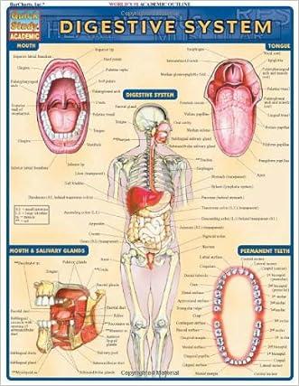 Digestive System (Quickstudy: Academic)