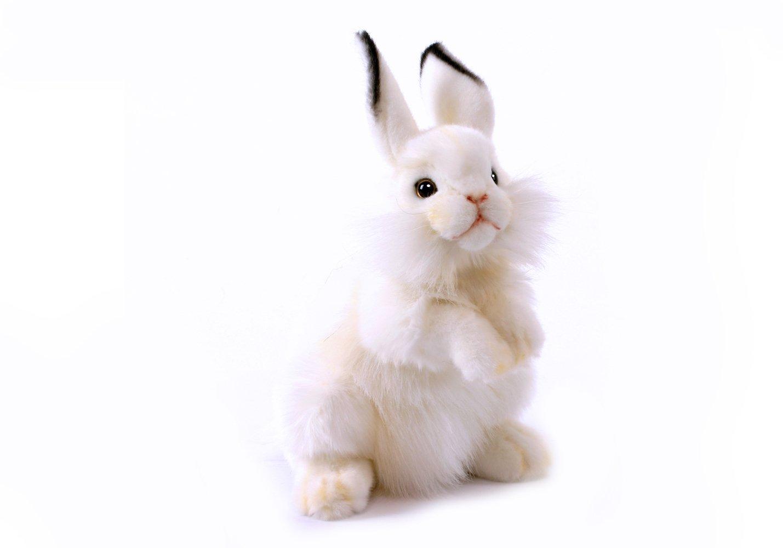 壁纸 动物 猫 猫咪 兔子 小猫 桌面 1429_1000