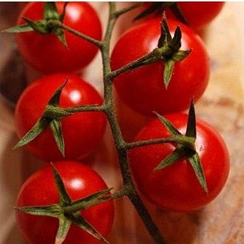 rote-susse-cherry-tomate-auch-fur-den-kubel-zuckertraube-20-samen