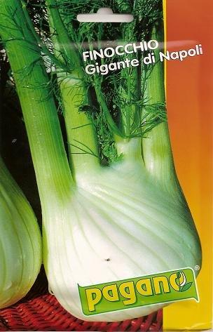 Finocchio Gigante di Napoli-Fennel of Napoli Seeds-10 g