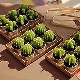Mini Cactus Plant Candles 6pcs/lot Party Christmas Wedding Home Decor