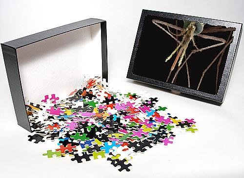 Photo Jigsaw Puzzle Of Lrds-83 Mosquito, Female From Ardea Wildlife Pets