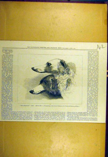 1877 Melodeteze Moscow Royal Hounds Dogs Sporting