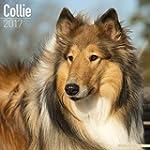 Collie Calendar - Dog Breed Calendars...