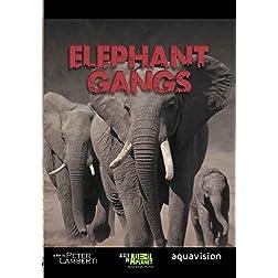 Gangland Killers : Elephant Gangs