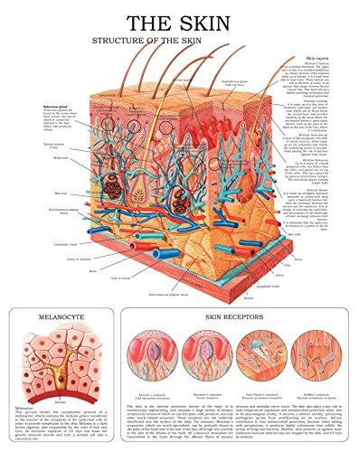 The Skin e-chart: Full illustrated (Skin Diagram compare prices)