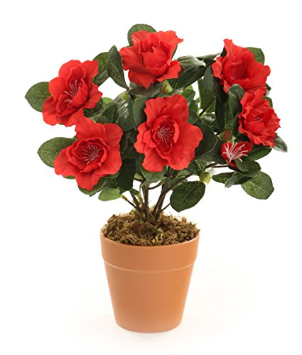 Prix des plante verte 3 - Reduction la redoute prix rouge ...