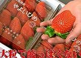 超大粒イチゴやよいひめ(デラックス2パック入り)甘くて酸っぱくないいちご