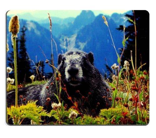 animal-marmot-groundhog-wildlife-mouse-pads-mouse-pad-rug-759-inch
