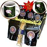 cgb_4273_1 Flowers - Pink Calla Lily - Coffee Gift Baskets