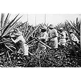 South America's Role in WWII, US Propaganda: Gracias Amigos DVD (1944)