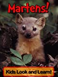 Martens! Learn About Martens and Enjoy Colorful Pictures - Look and Learn! (50+ Photos of Martens) (English Edition)