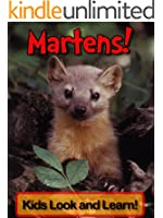 Martens! Learn About Martens and Enjoy Colorful Pictures - Look and Learn! (50+ Photos of Martens)