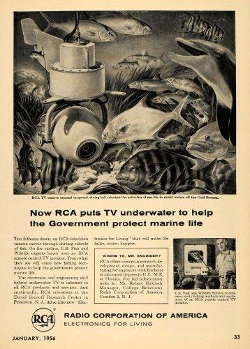 1956 Ad Radio Corporation America Underwater Marine TV - Original Print Ad (America Underwater compare prices)