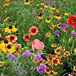 The Dirty Gardener Midwestern Wildflower Seed Mix - .5 Pounds