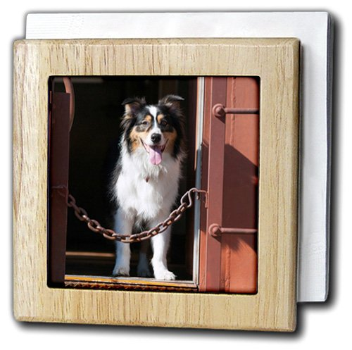 danita-delimont-dogs-australian-shepherd-in-a-train-car-6-inch-tile-napkin-holder-nh-230324-1