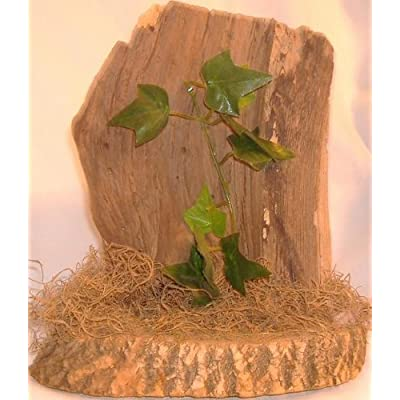 Large decorative natural driftwood ornament suitable for terrarium