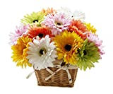 Indian Gift Emporium Cute Gerbera Daisy, Gladioli, Green Orchids, Birds of Paradise and Anthurium Basket (Bunch of 12)