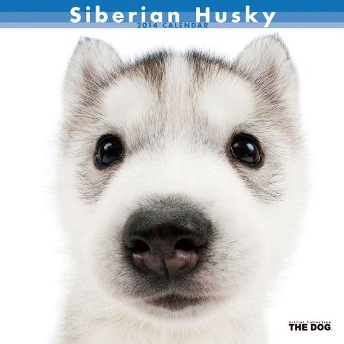 シベリアン・ハスキー 2014年 カレンダー