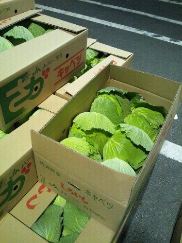 キャベツ 佐賀県産・九州各県産 1ケース4玉~9玉入 約10kg