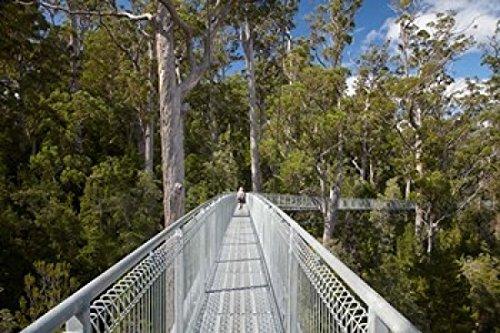 david-wall-danitadelimont-airwalk-paths-tahune-forest-tasmania-australia-photo-print-9144-x-6096-cm
