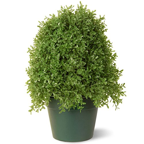 National Tree 15 Inch Boxwood Tree in Dark Green Round Plastic Pot (LBX4-15-1)