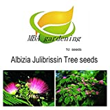 MBA gardening -100 MIMOSA / PERSIAN SILK TREE Albizia Julibrissin Seeds/Bonsai Persian Pink Silk Tree
