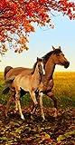 Horse Paso Fino Towel Horse Wonder Towel