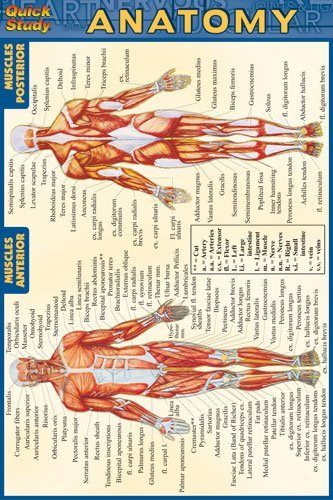 Anatomy (Quickstudy) (Chemistry Chart compare prices)