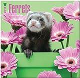 BrownTrout Publishers Ltd. Ferrets 2015 Wall Calendar