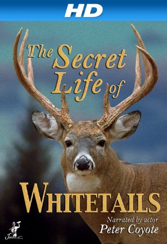 The Secret Life Of Whitetails [Hd]