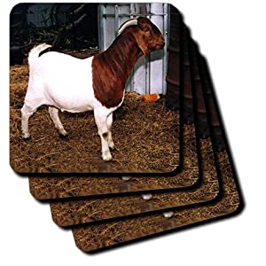 cst_818_3 Farm Animals - Boer Doe Goat - Coasters - set of 4 Ceramic Tile Coasters