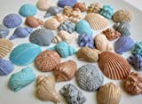 Multi-color Edible Seashell Cupcake Toppers (42 Pieces)