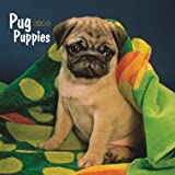 Pug Puppies 2009 Calendar