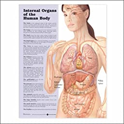Internal Organs of the Human Body Anatomical Chart 20\