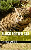 Black Footed Cat (Wild Cats of the World)
