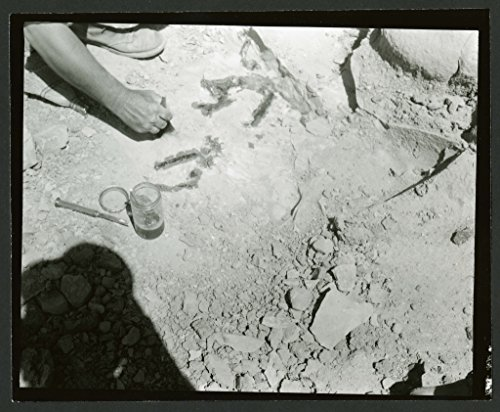 POSTER Someone probably Charles Lewis Gazin unearthing specimens 1959 Charles Lewis Gazin 3411 1959 Expedition to Wyoming Utah Field Photos Someone probably Charles Lewis Gazin unearthing specimens Man's hand shown using a tool desert to unearth specimens Glass bottle metal tool are depicted Dates 1959
