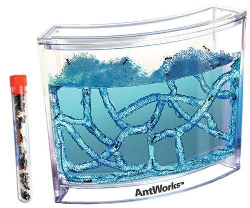 Live Blue Gel Ant Habitat