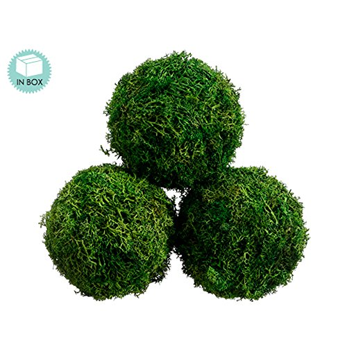 4.3D Preserved Sphagnum Moss Ball (3 ea./Acetate Box) Green (Pack of 6) dali katch moss green