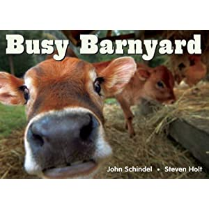 Busy Barnyard (A Busy Book) John Schindel and Steven Holt