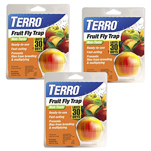 terro fruit fly trap where to buy dragon fruit