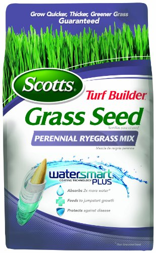 Lowes Grass Seed